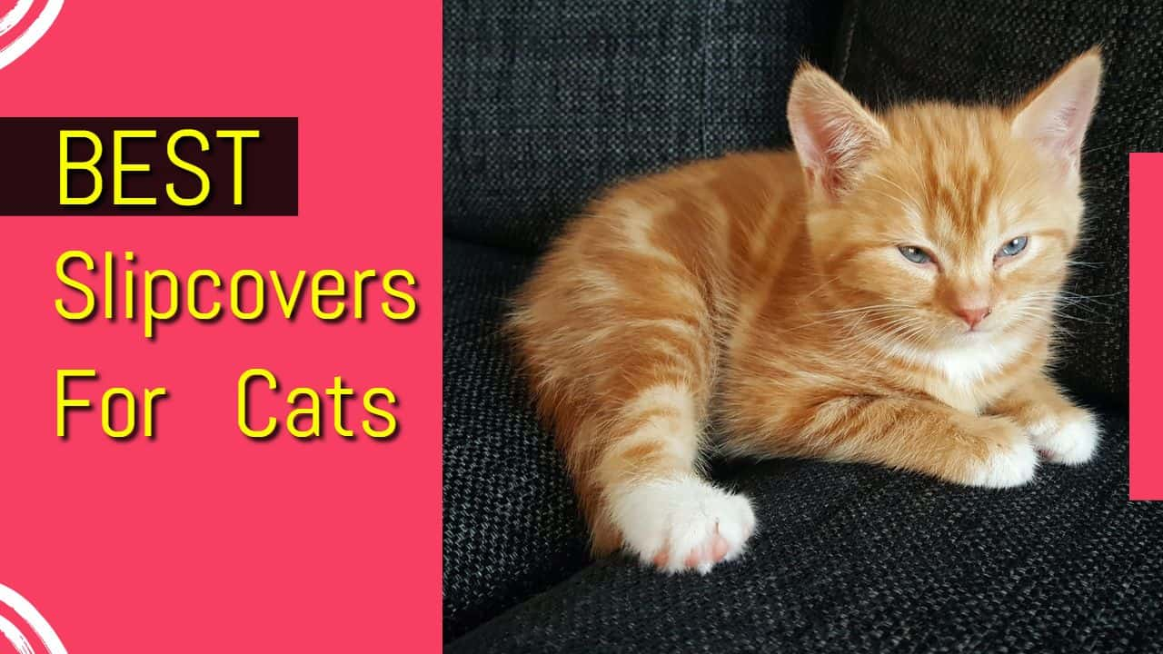 Best Slipcovers For Cat Owners: Secure Couch From Spills & Scratches
